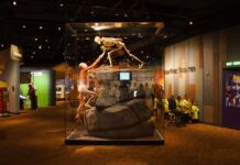 Health Expedition in Denver Colorado Museum