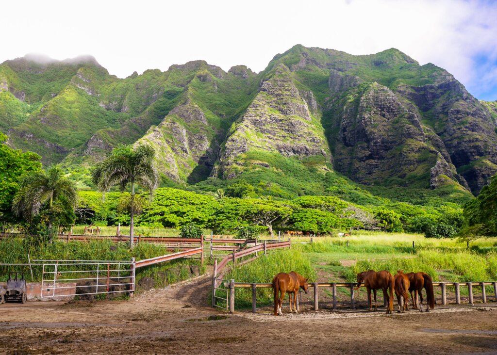 Four brown horses next to a mountain range in Kualoa Ranch.