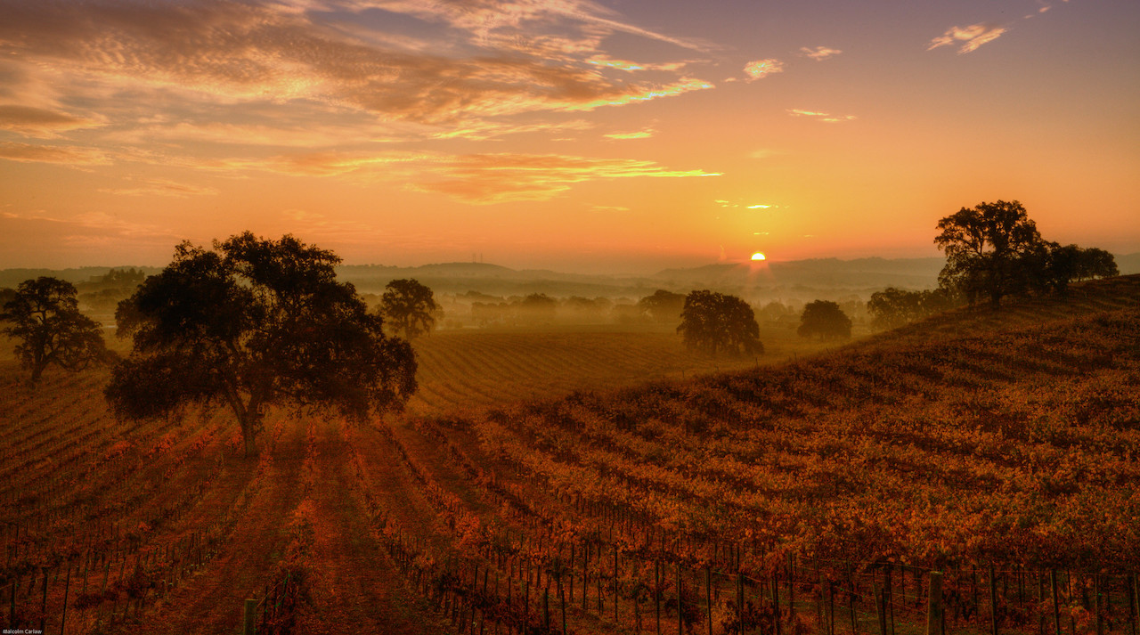 Peachy Canyon Vineyard at sunrise in Central Coast of California