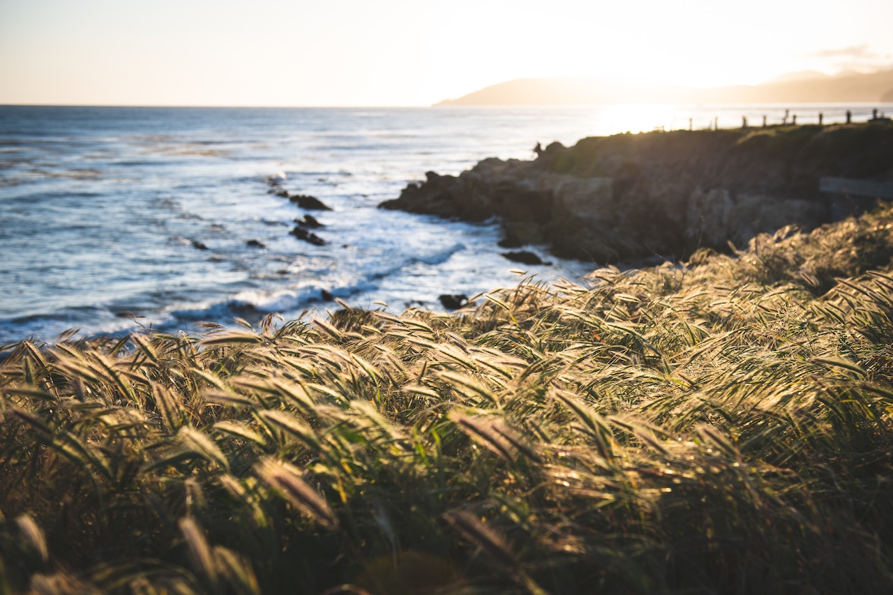 Brown grass on the cliff in Pismo Preserve near Pismo Beach