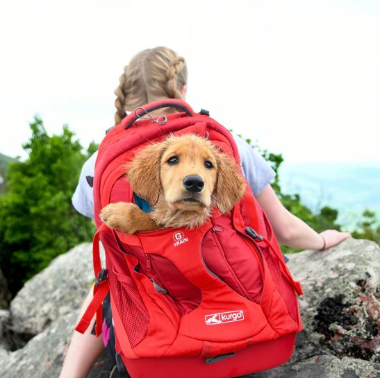 A girl carrying a red backpack with a brown dog inside.
