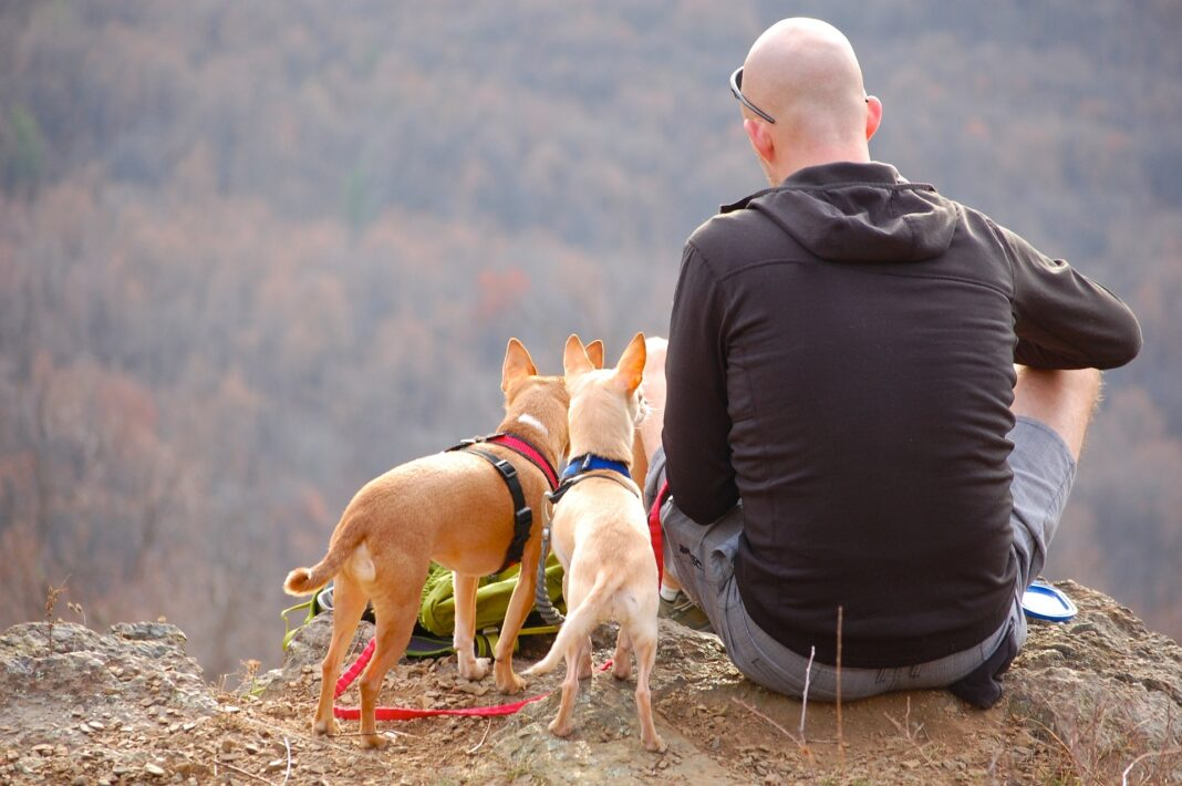 A man sitting near a cliff with two dogs.