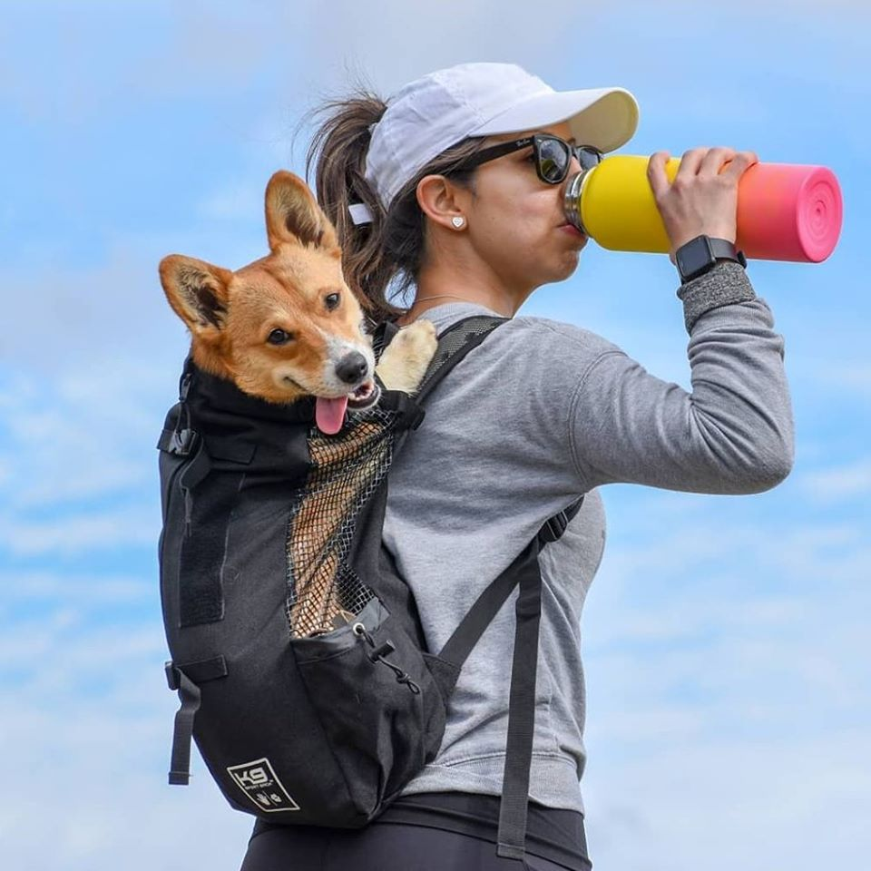 A girl drinking from a bottle while carrying a dog backpack.