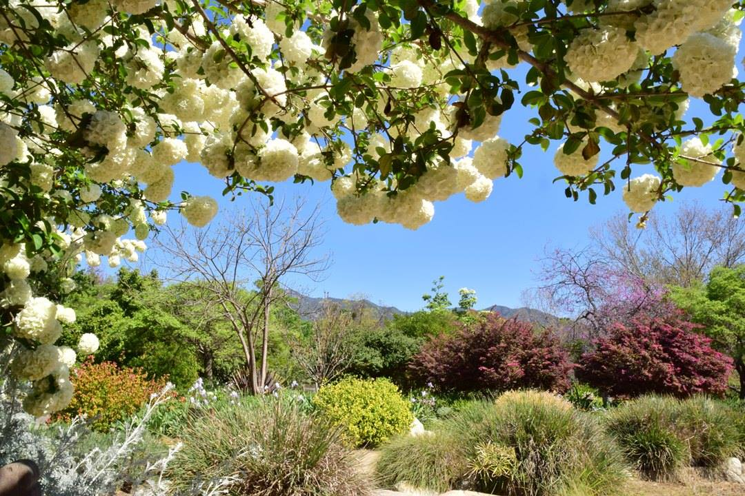 Enjoy free things to do in Los Angeles County Arboretum and Botanic Garden