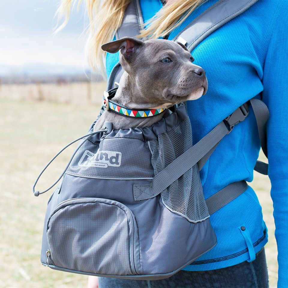 A person carrying a backpack with a gray dog inside.