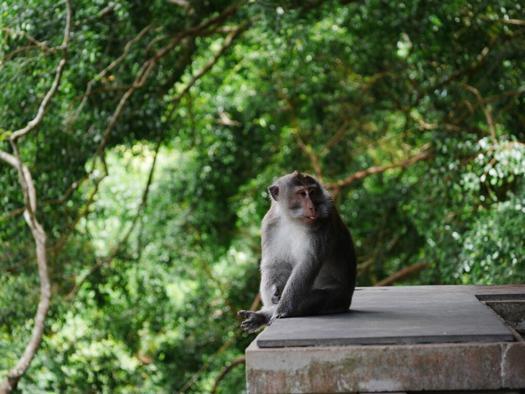 A monkey sitting on a wooden platform.