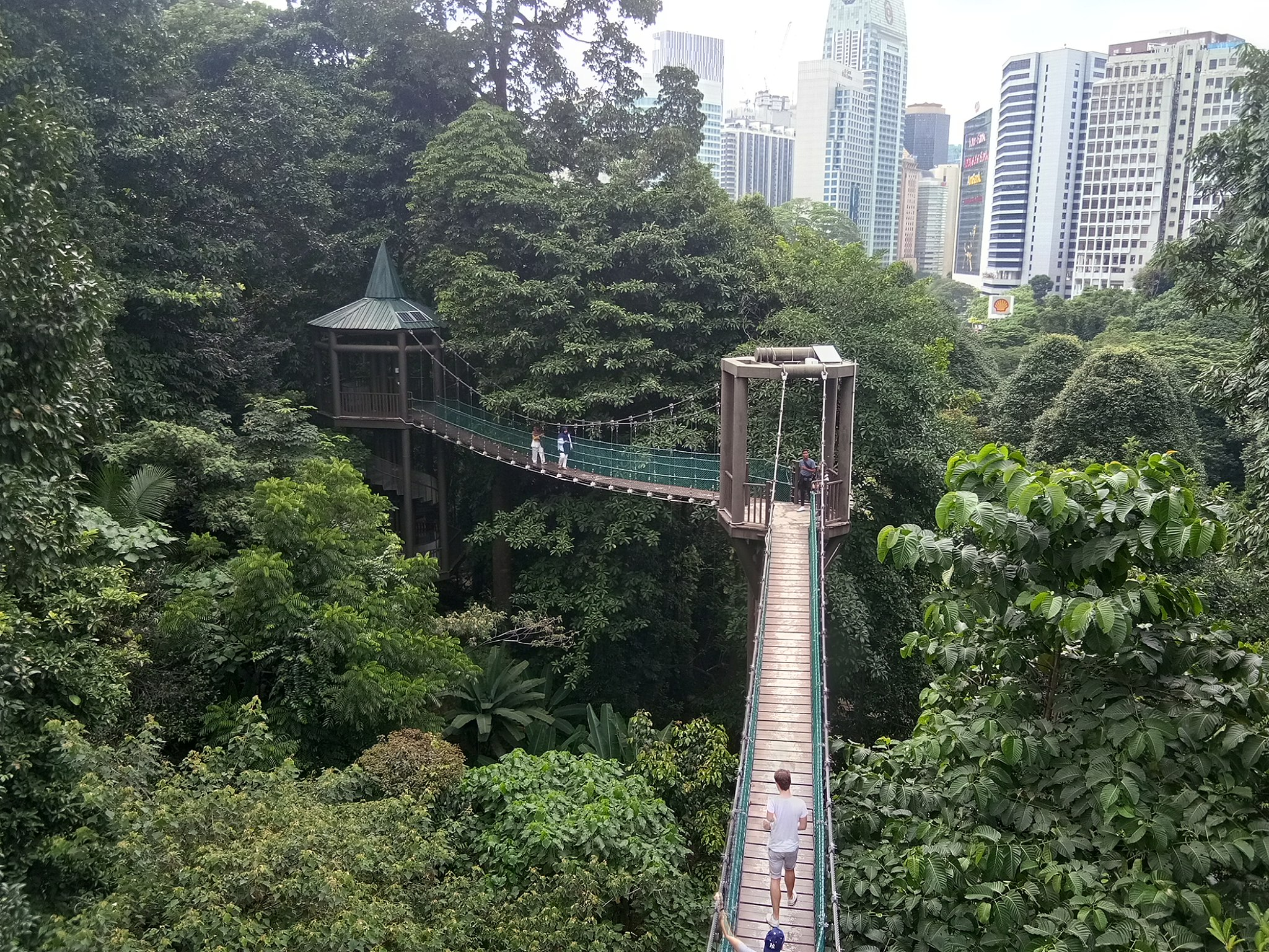 Canopy Walk at the KL Forest Eco Park during the day.
