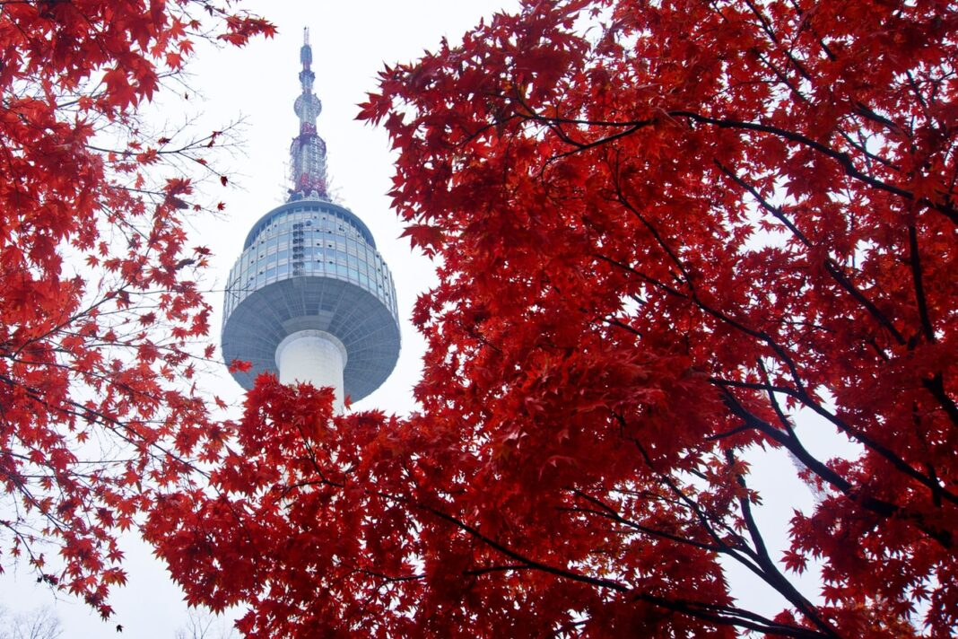 A shot of Namsan Tower behind trees, a famous landmark in South Korea.