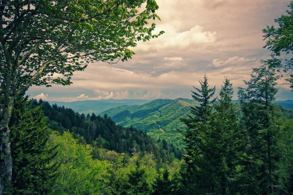 Gatlinburg Forest View Landscape